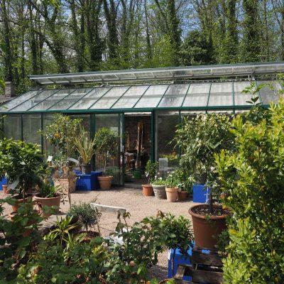 Das Glashaus im Ippenburgfer Zitrusgarten